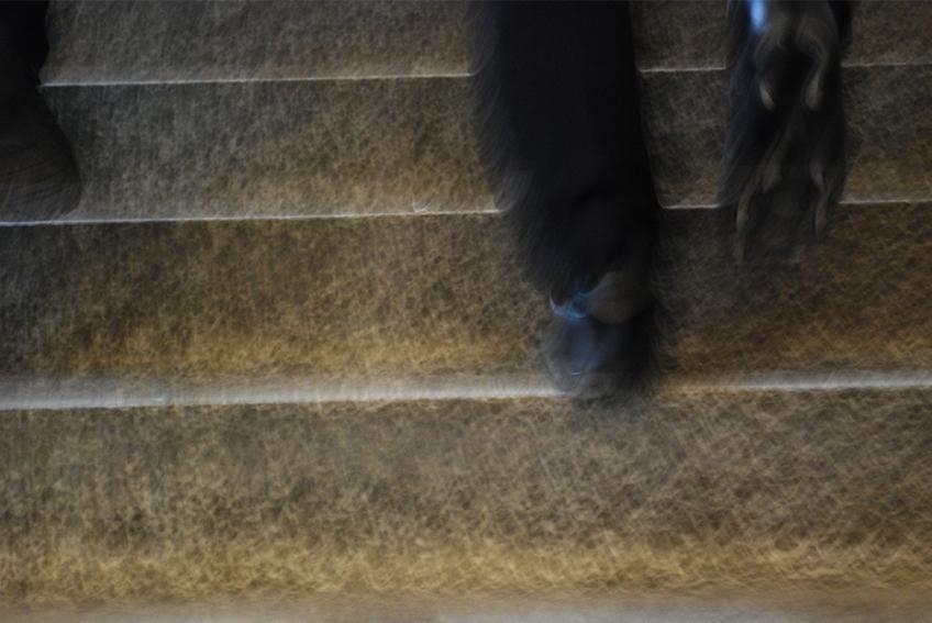 Nicole Panneton - L'escalier - Photographie numérique - Projet Déambulation dans un lieu incertain - Crédit photographique Nicole Panneton - 2013