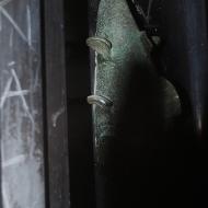 Nicole Panneton - Le poisson métallique - Photographie numérique - Projet Déambulation dans un lieu incertain - Crédit photographique Nicole Panneton - 2013