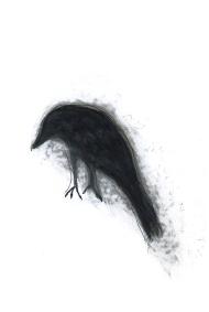 Dessin de Nicole Panneton - L'oiseau noir - Graphite et feutre - 2013